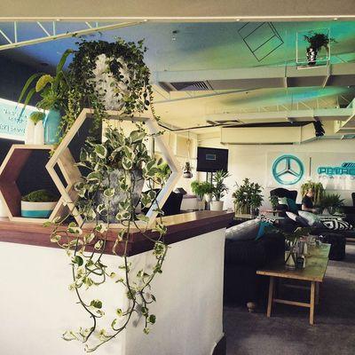 Plants And Detail Indoor